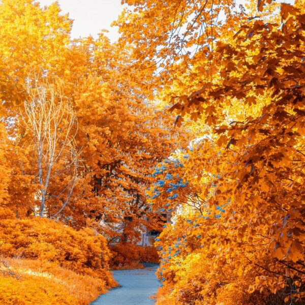 Forest of trees with autumn leaves