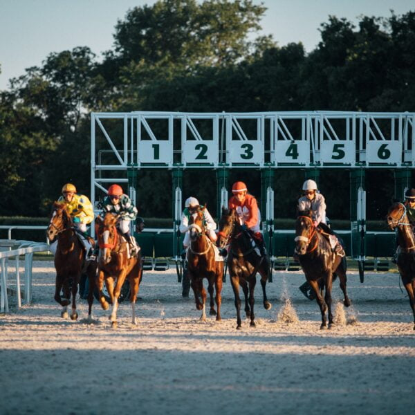 horse race just leaving the gate